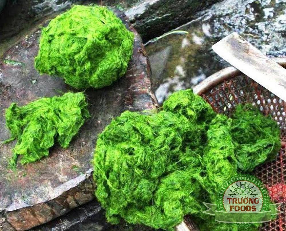 rêu đá phú thọ