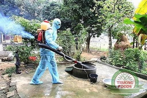 Tập trung diệt bọ gậy loăng quăng phòng ngừa sốt xuất huyết